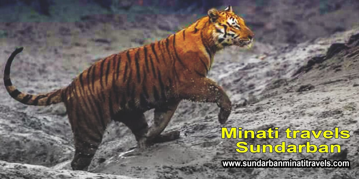 sundarban tour photos